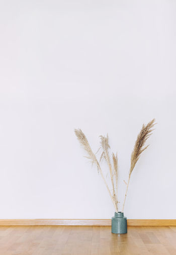 Close-up of white feather on table against wall
