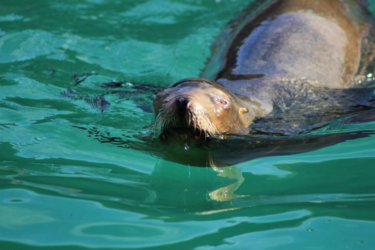 High angle view of seal swimming in water