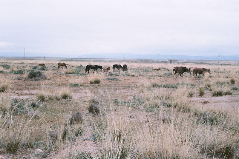 Horses grazing on landscape against sky