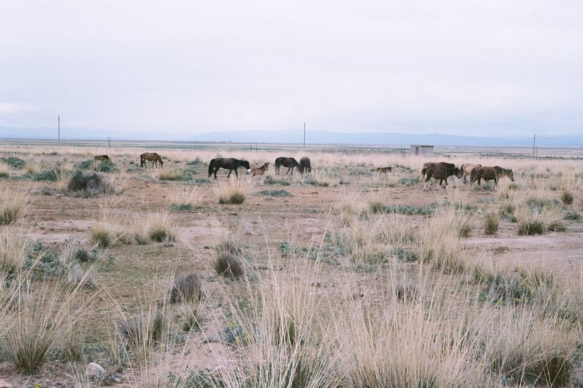 Film Photography EyeEm Selects Animals In The Wild Animal Themes Landscape Mammal Grass Nature Animal Wildlife Safari Animals Day No People Outdoors Large Group Of Animals Sky Beauty In Nature African Elephant