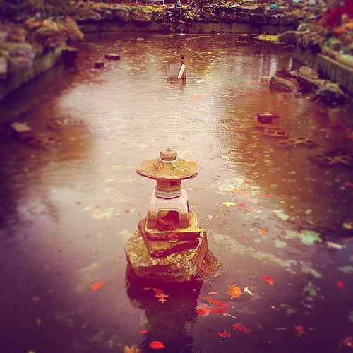 Winter comes on fast From pond to warmer basement Let's convey the koi. Koi Belle_isle_conservatory Aquarium Haiku