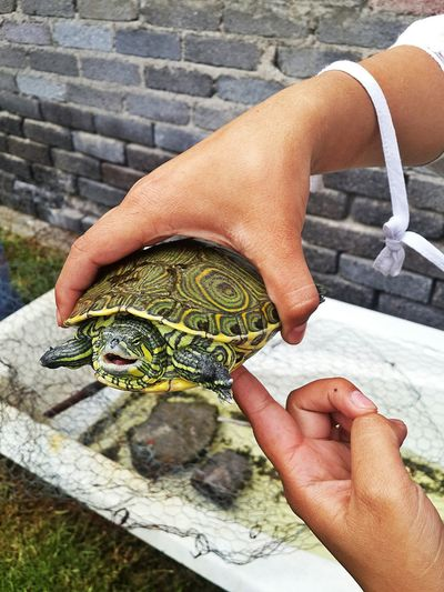 Turtle 🐢 Smiling One Animal Human Hand Human Body Part Outdoors Day Reptile Close-up Nature 2016