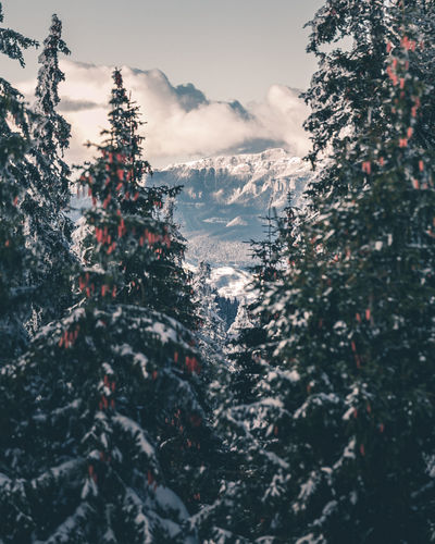 Beauty In Nature Cold Temperature Coniferous Tree Day Fir Tree Frozen Growth Mountain Nature No People Outdoors Pine Tree Plant Scenics - Nature Sky Snow Snowcapped Mountain Tranquil Scene Tranquility Tree Winter