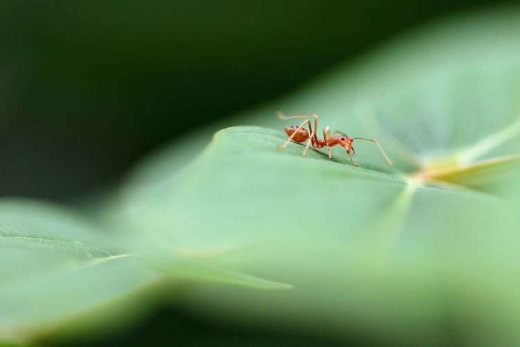 Ant What Do You Want? Animal Themes Animals In The Wild Insect Leaf One Animal Green Color Nature No People Day Close-up Animal Wildlife Outdoors Plant Freshness