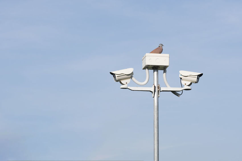 Bird on the security cameras in garden on blue sky background Record Alarm System Crime Detection Electronic Home RISK Securety View Cctv Cctv Camera Control Danger Guard Monitor Privacy Private Property Protect Safe Secure System Technology Video Warning