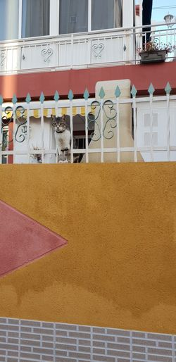 Cat Fence Multi Colored Architecture Building Exterior Built Structure Urban Scene