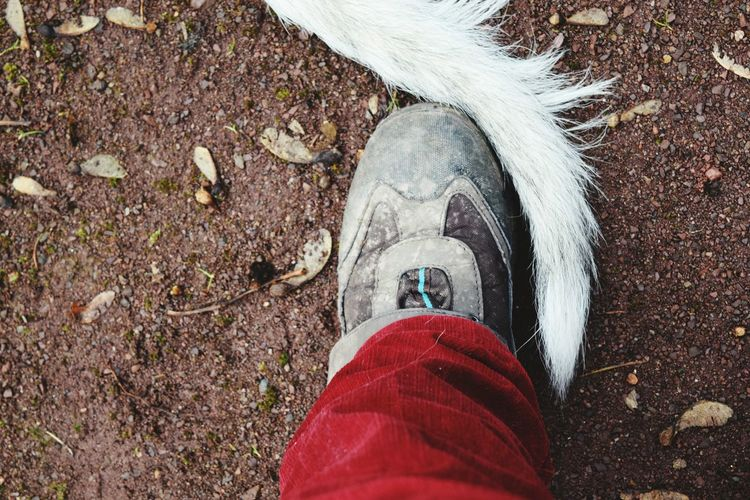 From My Point Of View Feet On The Ground Personal Perspective Low Section Human Leg Real People Human Body Part Close-up People Petscorner Dogs Of Winter Take A Walk In The Park Dogslife Cearnaigh Irish Wolfhound Dogs Of EyeEm Winter 2017 February 2017 Showcase February 2017