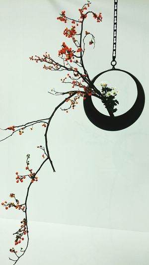 IKEBANA Flower Arrangement 生け花 Japanese Traditional Japanese Culture Japan Japan Photography