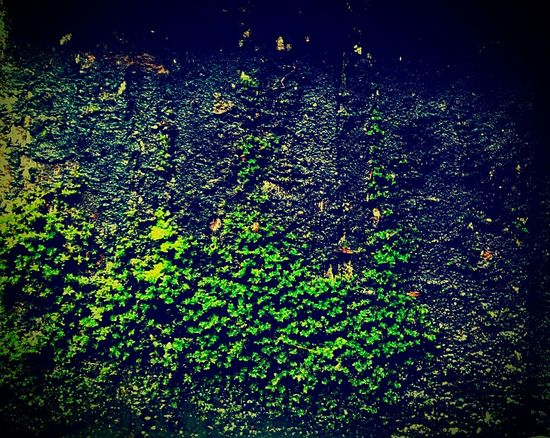 Hello World Check This Out Randomclicks📷 Moss On Wood Green Nature Photography ♥ Moss Covered Wall Natural Beauty Save The Nature EyeEm Best Shots - Nature Savetheplanet Beuty Of Nature EyeEm Nature Lover EyeEm Best Shots Save Nature  Eyeem Market Eyeem Photography