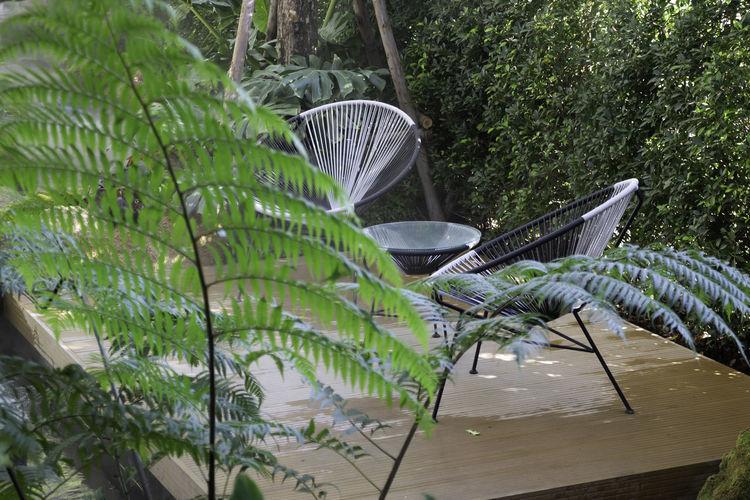 Coconut palm tree by plants in yard