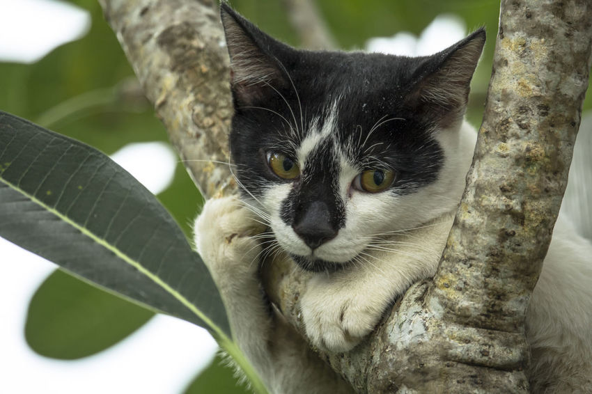 Meow & Tree Cats Of EyeEm Cats 🐱 Cute Cat Meow Meow🐱 Black And White Black And White Cat Cat Cat Lovers Cat On Tree Cats Cat♡ Close-up Cute Domestic Cat Feline Looking At Camera Mammal No People One Animal Outdoor Photography Outdoors Outdoors Photography Outdoors❤ Portrait