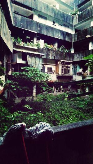 Hidden Gardens Hidden Yard Garden