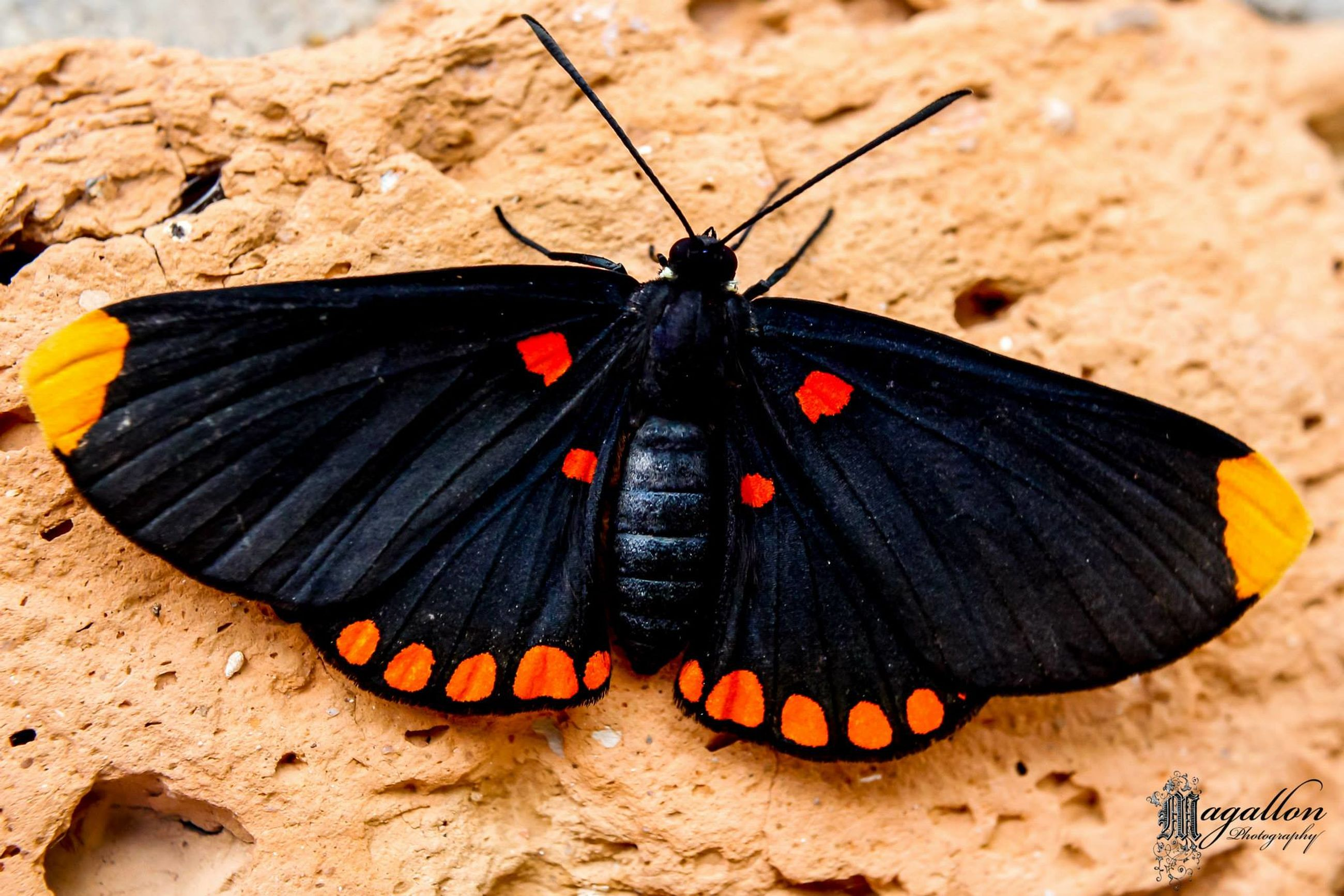insect, animal themes, animals in the wild, one animal, butterfly - insect, wildlife, butterfly, animal wing, close-up, animal markings, natural pattern, animal antenna, nature, focus on foreground, beauty in nature, outdoors, orange color, day, no people, high angle view