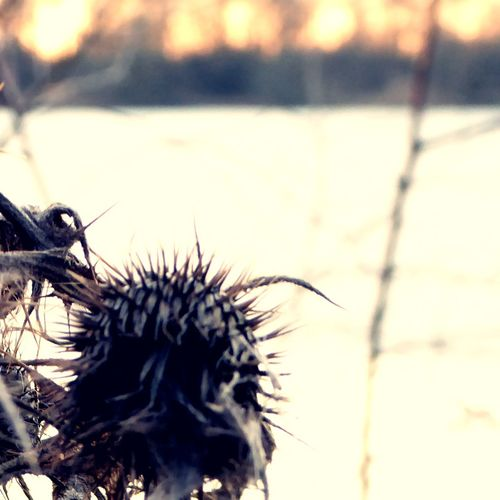 Bizarre Plants😍 Close-up Focus On Foreground Sunlight Fragility Of Life Enjoy That View Tranquility For My Friends 😍😘🎁 Beauty In Winter😍 Beauty In Evanescence Wintertime ⛄ Cold Outside ❄⛄  Lakesideview Cold Temperature Sunny Winter Day Frosty ⛄ Tranquil Scene Lakeside Beauty Blurred Perspective Favoritelake Lieblingspflanzen 😍