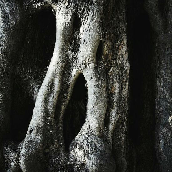 Close-up Human Body Part Real People One Person Outdoors Human Hand People Day Tree Trees And Nature Face Face In The Tree Strange Plants Olive Tree