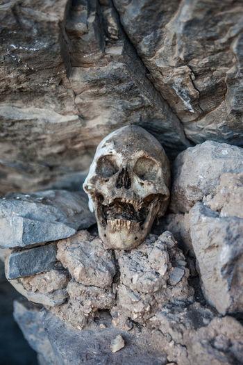 Human skull on rocks