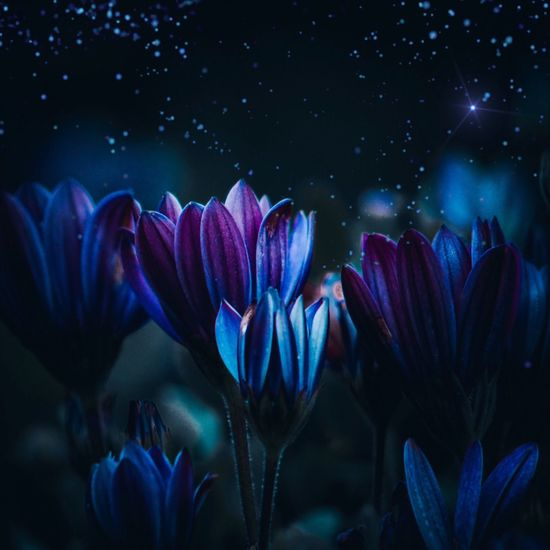 Beauty In Nature Close-up Flower Petal Purple Plant Flowering Plant Nature Fragility Night Vulnerability  Growth Inflorescence Freshness Flower Head No People Blue Star - Space Sky Water