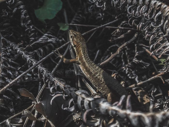 Animal Themes Animal One Animal Animals In The Wild Animal Wildlife No People Vertebrate Lizard Marine Day Insect Indoors  Water High Angle View Invertebrate Close-up Reptile Nature