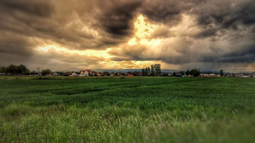 Dramatic Sky Agriculture Field Cloud - Sky Sunset Landscape Rural Scene Farm Crop  Nature Beauty In Nature Sunlight Growth Sky Sun No People Grass Tranquility Outdoors Plant Storm HDR Cloud