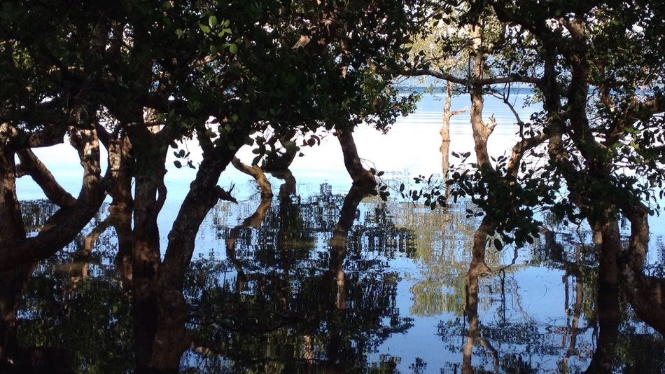 Sea Mangrove Mirroring In Water Early Morning Relaxing Nature