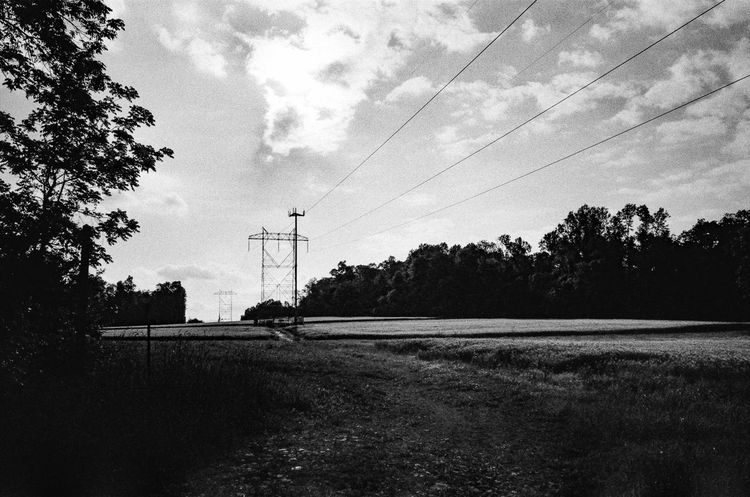 Film Blackandwhite Cable Connection Day Electricity  Electricity Pylon Field Film Photography Fuel And Power Generation Leica Nature No People Outdoors Power Line  Power Supply Silhouette Sky Technology Telephone Line Tree