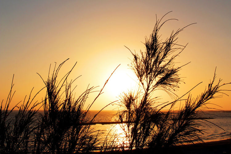 Canary Islands Spanien Beach Beauty In Nature Holiday Landscape Marram Grass Nature No People Outdoors Scenics Sea Silhouette Sky Spaın Sunset Tenerife Tenerife Island Teneriffa Tranquil Scene Tranquility Tree Water