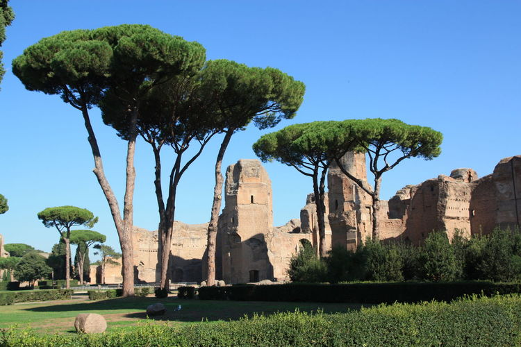 Low angle view of old ruins and trees at roman forum against clear blue sky