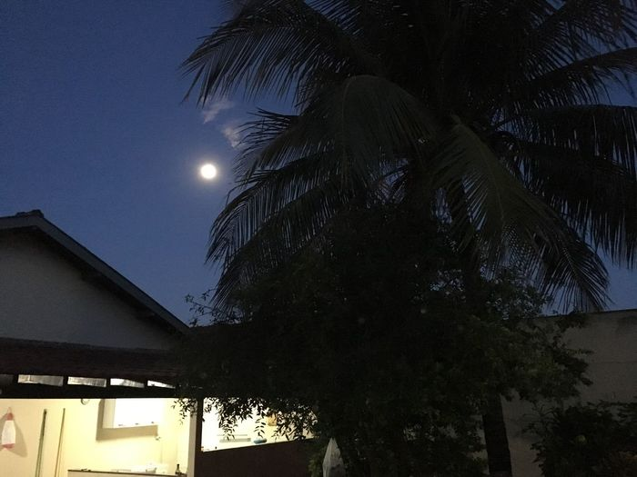 Night Low Angle