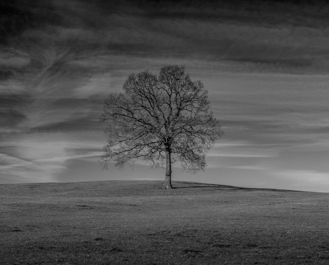 Lonely Tree Bayern Germany Hanging Out Taking Photos Nature Photography #naturelovers Landscape Best EyeEm Shot Sky And Clouds No People Schwarzweiß Monochrome Photography Photography Bnw Bnwart Safetheplanet Bestoftheday Sky Nature Day