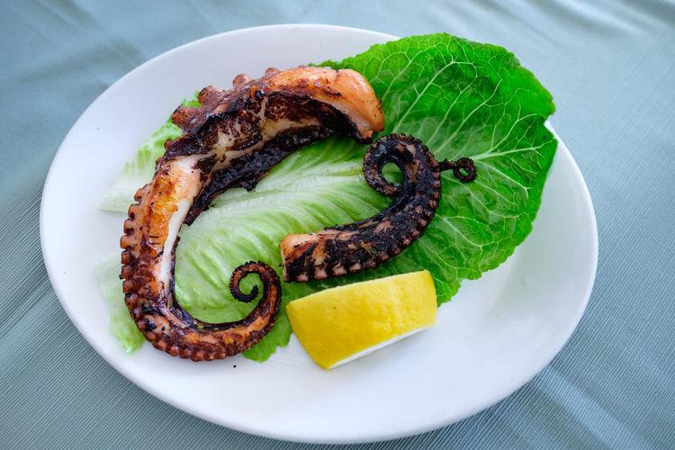 An Octopus on a