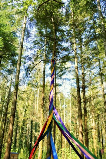 Maypole Ribbon May Day Rainbow Childhood Tradition Maypole May Tree Plant Nature Growth Day Forest No People Beauty In Nature Outdoors WoodLand