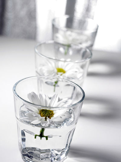 Flowers in glasses aligned side by side In A Row Align Arranged Arrangement Cafe Close-up Crysanthemum Day Decration, Interior, Office Decor, Intersting, Calm Drinking Glass Floating On Water Flower Flower Head Fragility Freshness Indoors  Light And Shadow No Body No People Refreshment Side By Side Studio Shot Transparent Water Wedding