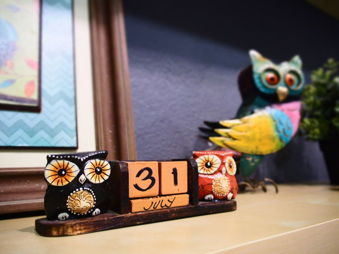 Home Stay Owl Home Owls Are Cute Owllove