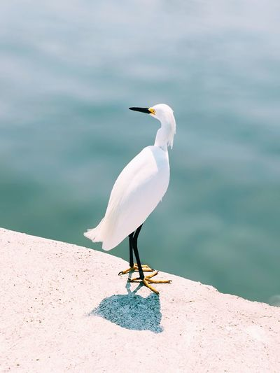 High angle view of bird perching on pier