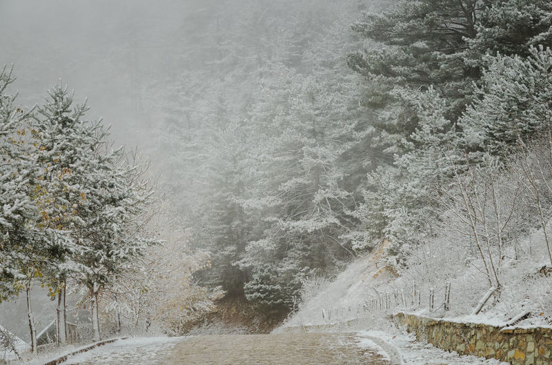 Pathway amidst snow covered trees in forest