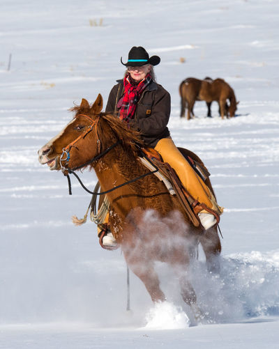 Feb 2019 - Music Meadows Ranch Colorado Cowgirl Chaps Cowboy Hat Ranch Life Real People Horse Working Animal One Animal Domestic One Person Livestock Cowboy Outdoors Riding Woman Winter Snow Galloping Domestic Animals Horse Life Horse Themes Horseback Riding Herbivorous Mammal