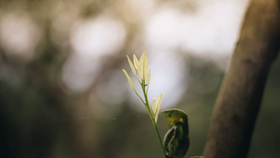 Beauty In Nature Close-up Day Focus On Foreground Green Color Growth Leaf Nature No People Plant Selective Focus