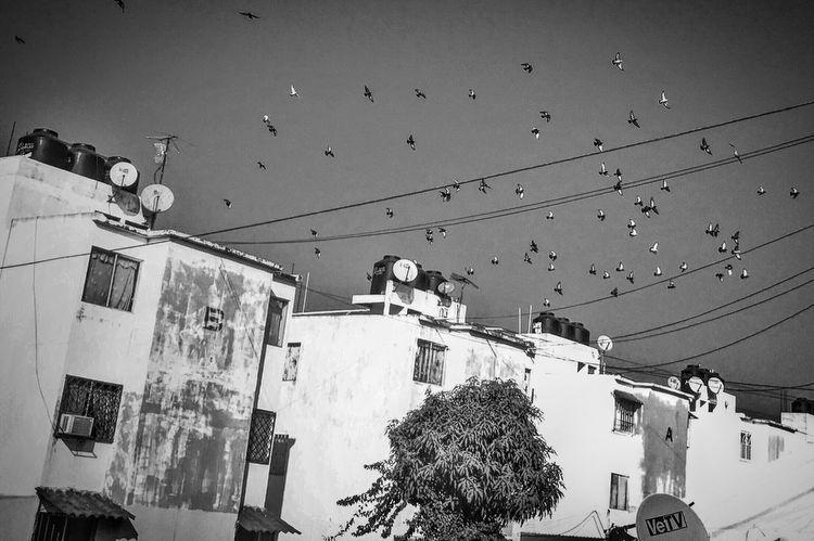 """""""Y volar como los pájaros..."""" Streetphotography IPhoneography Urban@ndante Blackandwhite Monochrome"""