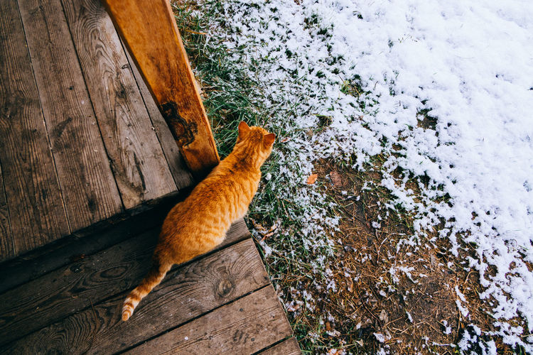 High Angle View Of Cat On A Porch