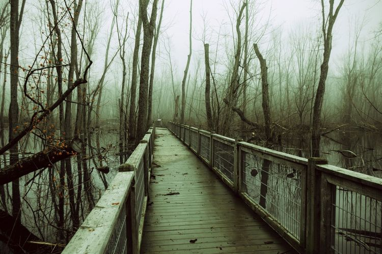 Tree Trunk Trees Branch Path Follow The Path A Walk In The Woods Forest Mysterious Swamp Ambiance Foggy Foggy Morning Tree Water Footbridge Cold Temperature Fog Bare Tree Bridge - Man Made Structure Winter Pathway Long Fallen Tree