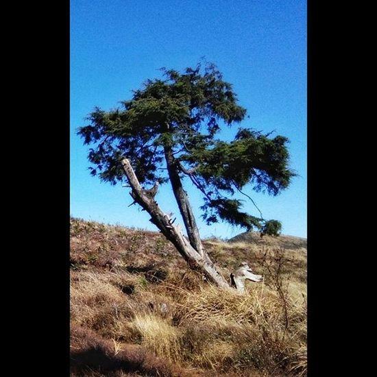 Instasize INDONESIA Dieng Praumountain Tree Earth Beutiful  Nature Dragon Dragontree Blue Sky Travel Explore Panorama Landscape
