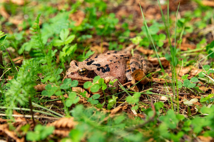 View of frog on land