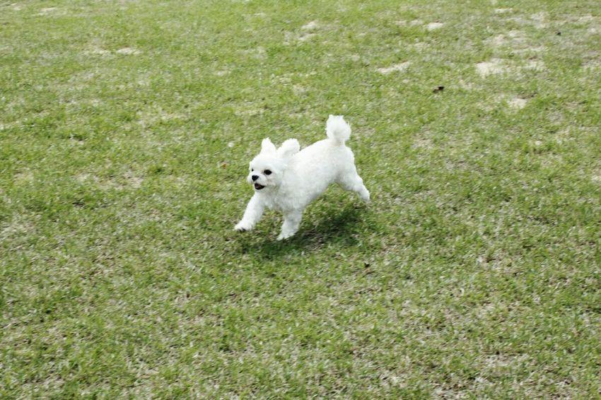 푸른초원위 🐇토끼 말티즈 개 Dog Rabbit Maltese