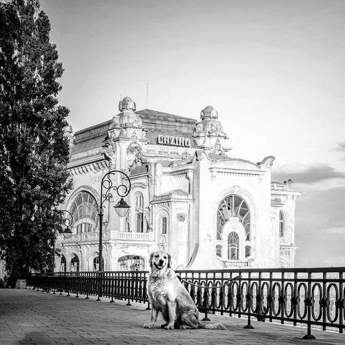 Dog sitting on historical building against sky