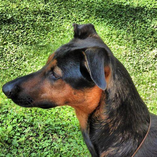 Perfil de Runa. Guapaguapa Doglovers Animal