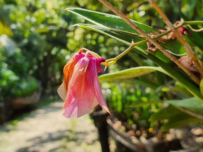 pink flower in