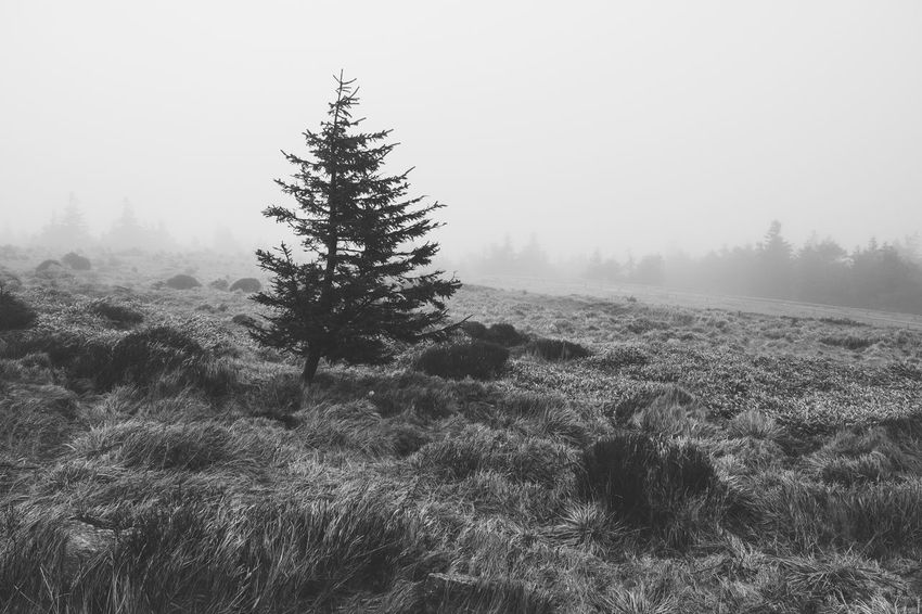 Beauty In Nature Black And White Blackandwhite Coniferous Tree Day Environment Field Fog Grass Growth Harz Land Landscape Monochrome Nature No People Non-urban Scene Outdoors Plant Scenics - Nature Sky Tranquil Scene Tranquility Tree Winter