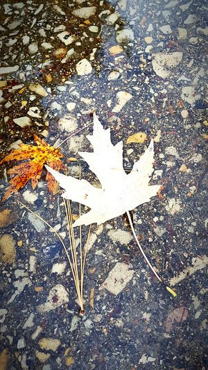 Taking Photos Nature Leaves in a puddle Fall Season Fall Beauty Hugging A Tree Check This Out Enjoying Life