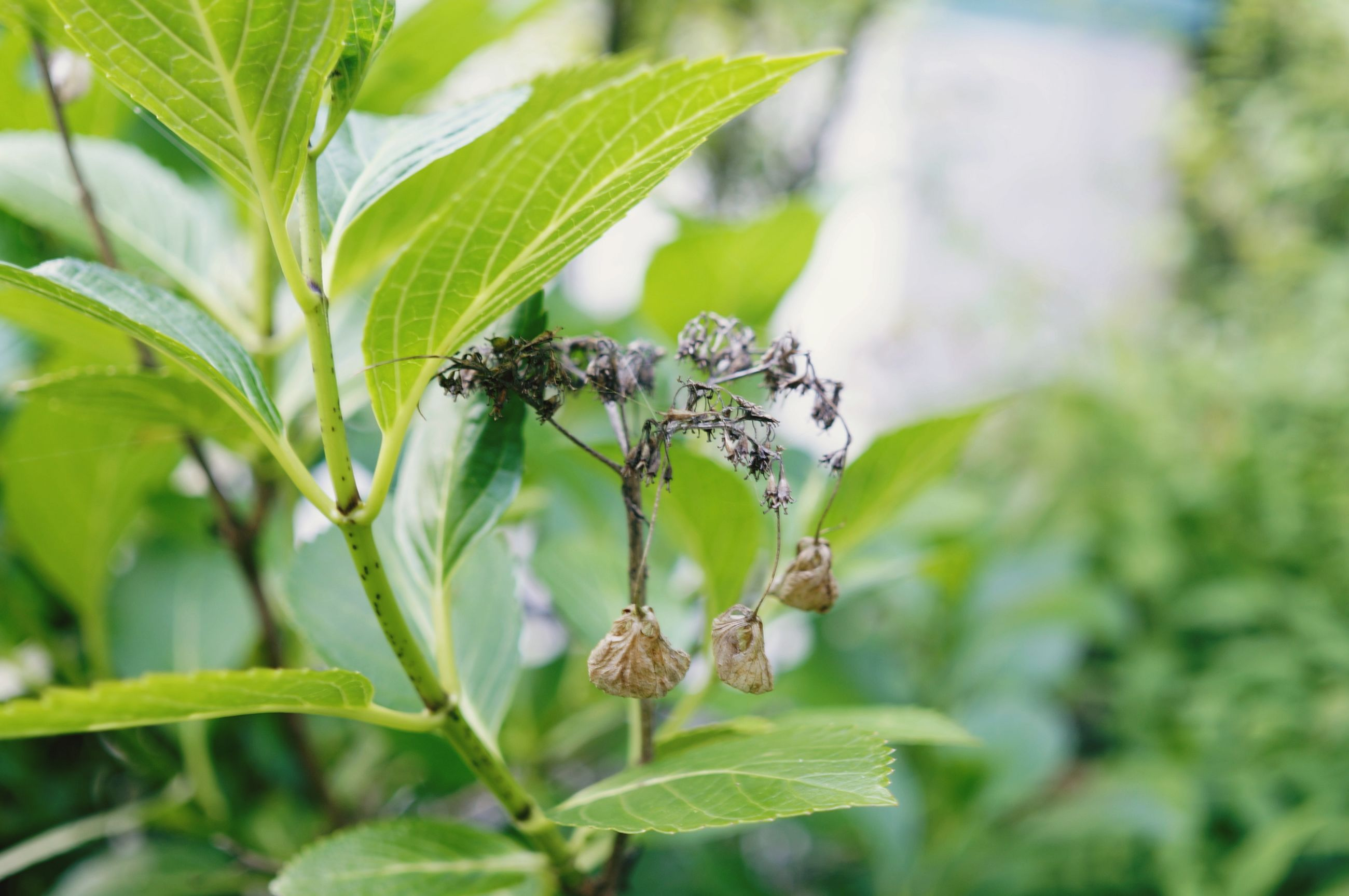 insect, leaf, animal themes, plant, one animal, green color, growth, animals in the wild, close-up, focus on foreground, wildlife, nature, selective focus, day, outdoors, no people, beauty in nature, stem, freshness, green