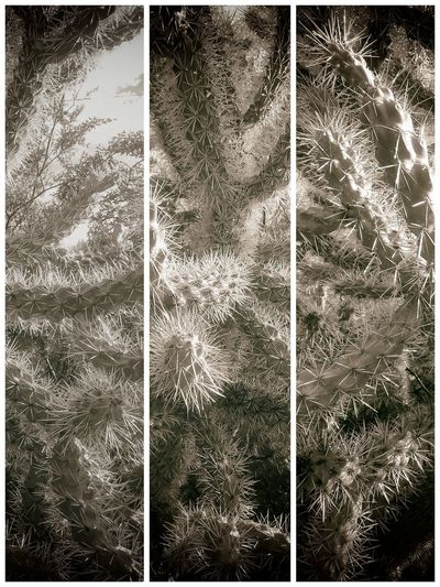 Transfer Print Plant Auto Post Production Filter No People Growth Nature Full Frame Tree Day Close-up Beauty In Nature Backgrounds Outdoors Winter Tranquility Pattern Fragility Cold Temperature Natural Pattern Land Softness Coniferous Tree Fir Tree